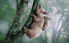 Свинья с поросенком забралась на дерево