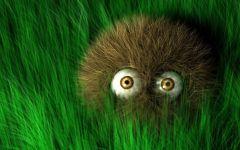 Ежик в траве,  фотография  обои