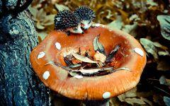 Игрушечные ежики и гриб
