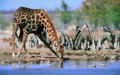 Дом жирафа - Африка, фотография  фото обои