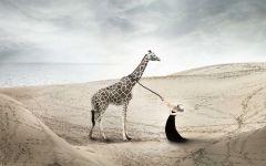 Девушка тянет жирафа за поводок
