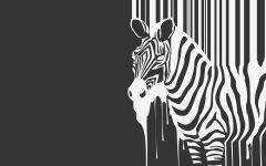Зебра белая или черная?