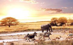 Зебры, слон и спрингбоки