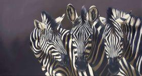 Три зебры,  фотография  обои