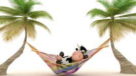 Корова отдыхает в гамаке под пальмами