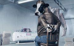 Корова - заложник