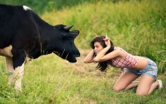 Девушка дразнит корову обои