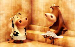 Коровы в сауне (бане),  фотография  обои