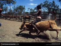 Чернокожий мужчина катается на теленке