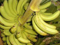 Бананы фрукты