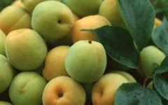 Описание абрикос, фото обои фотография