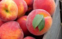 Польза персиков, фото обои фотография