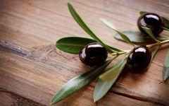 Оливки на ветке обои