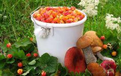 Ведро морошки и грибы