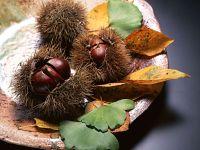 Каштан (Aesculus hippocastanum) фото