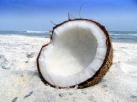 Кокосовый орех на берегу моря фото