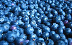 Голубика фото