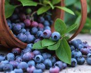 Голубика ягоды