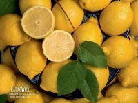 Желтый лимон фотография