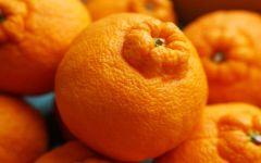 Опельсин апельсин