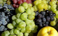Виноград полезные свойства, фото обои фотография
