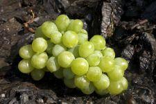 Гроздь винограда фото