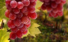 Гроздь розового винограда