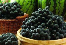 Урожай темного винограда