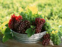 Что делать с виноградом? обои