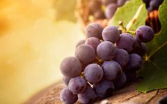 Синий виноград домашний