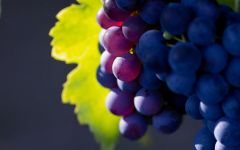 Виноград черный домашний