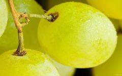 Виноград крупным планом