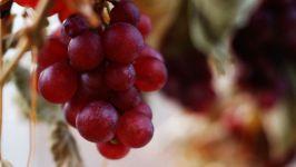 Содержание винограда