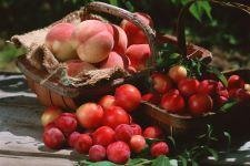 Сливы и абрикосы, фото обои фотография