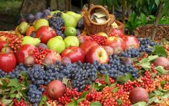 Осенние фрукты и ягоды обои