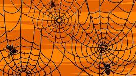 Паутина с пауками,  фото  обои