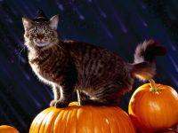 Кошка-ведьма на тыкве фото