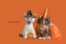 Котенок-ведьма и котенок-фея