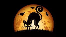 Черный кот с выгнутой спиной