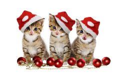 Три новогодних котенка