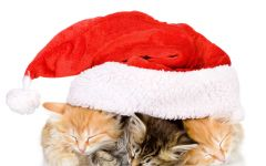 Три спящих котенка под рождественской шапкой
