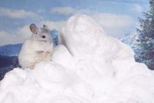 Шиншилла на снегу