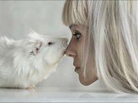 Морская свинка и девушка
