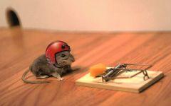 Мышь в каске рядом с мышеловкой
