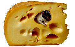 Мышка в сыре фото