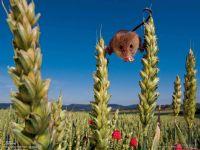 Мышь-малютка на фоне голубого неба