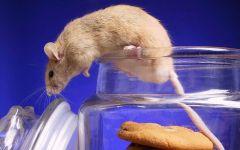 Мышка вылезает из банки