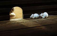 Кот и мыши фото