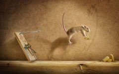 Мышь украла сыр из мышеловки