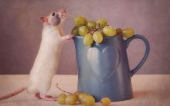 Крыса и виноград